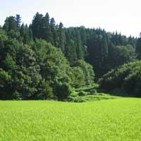 希少価値の高い米