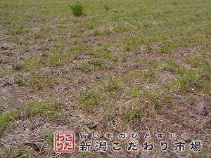 農薬・化学肥料を使わない田んぼ