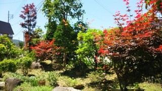 我が家の庭園のコントラストです。