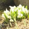 春です❗春です❗