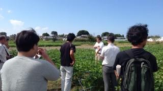 枝豆栽培研修