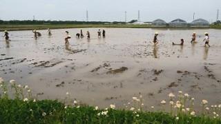 田んぼでの泥んこ遊び