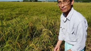 新米収穫間近