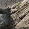 石に生える木