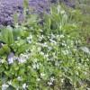 畔の白い花