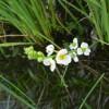 田に咲く花