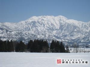 八海山の雪どけ水