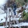 明日は、庭の雪囲いに専念をしよう!