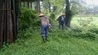 今日も、ホタルの宿の草刈り
