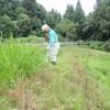 草刈の毎日