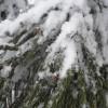 ふわふわ雪