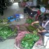 山菜の仕分け作業
