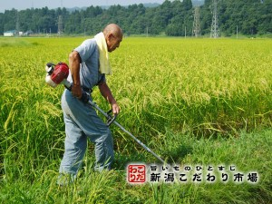 有機JAS認定米