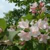 今盛りの花