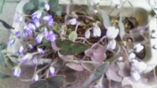 やっと春になりました。