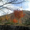 晩秋の坂戸山の紅葉です。