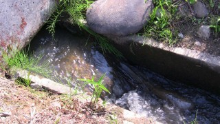 田んぼ脇の用水路