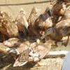 カモ農法の利点