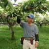 梨畑の巡回