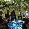 梨の摘果作業