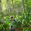 新緑のブナ林へ