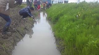 ホタルの幼虫を田んぼの江(水路)