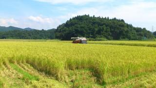 収穫シーズン突入です。