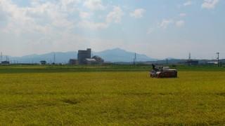 コシヒカリ収穫