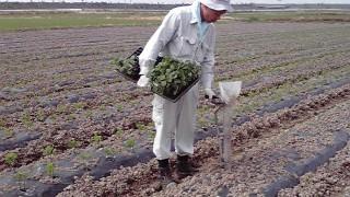 晩酌豆の植え付け