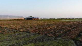 休息中の茶豆畑