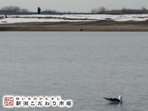 ヤツメウナギ漁