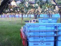 最近の果樹園の様子by中野