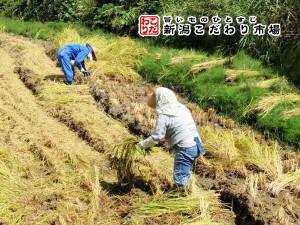 山間地の棚田栽培