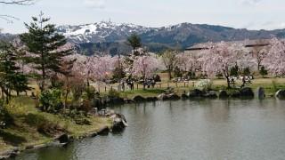 桜がみごとです。