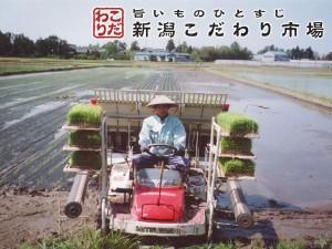 徹底管理された稲作