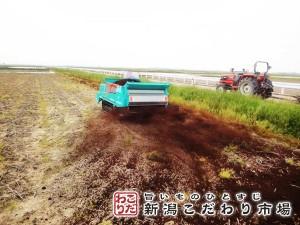 徹底した土壌管理