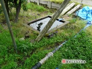 複合活性水による栽培
