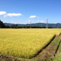 米処 新潟のコシヒカリ