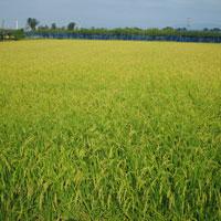 農業に適した新潟産