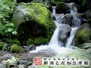 澄んだ山の天然水